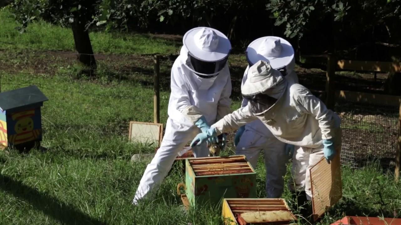 Rucher des Iris : 1ère récolte de miel