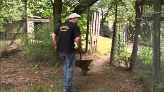 Farma Zoltana - Zoltan- król wilków - Discovery Channel