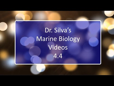 An Introduction to Marine Plants - Lecture 4.4 - Marine Biology - Biol 321