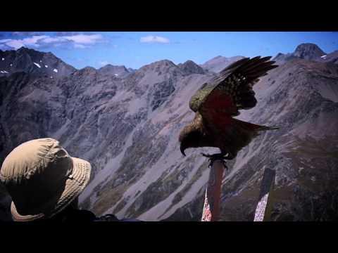 Kea Flying Avalanche Peak