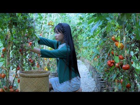 抢在番茄掉果之前,全收回来弄点好吃的——红宝石番茄酱 'Red Sapphire Tomato Sauce' | Liziqi Channel