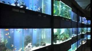 Der Aquaristik Laden