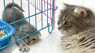 '¡Mamá gata, sácame de mi jaula!' los pequeños gatitos buscan una salida