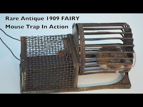 Rare Antique 1909 FAIRY Mouse Trap In Action - Complete With A Fun Exercise Wheel.