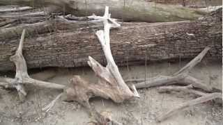 Finding Driftwood For An Aquarium