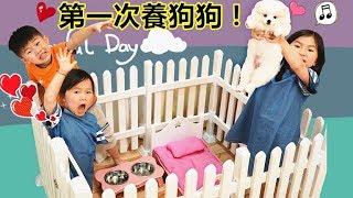 第一次養狗狗寵物!博美狗狗好可愛喔~ 寵物玩具淘寶開箱 Puppy Pomeranian Breeding Dog(Toys Opening)!