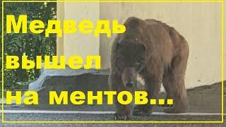 Медведь вышел на ДПС ников
