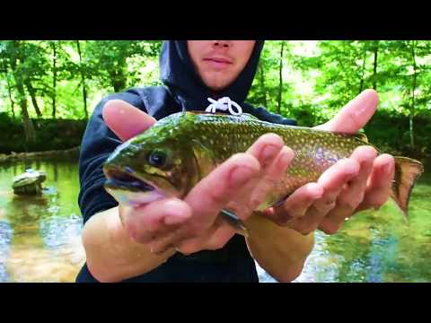 Maggie Valley, North Carolina - Trout Fishing