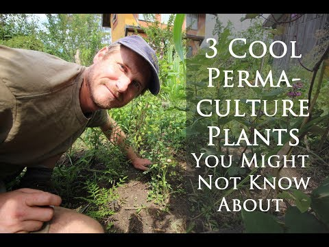 3 Rare and Easy-to-Grow Permaculture Plants You Might Not Know About