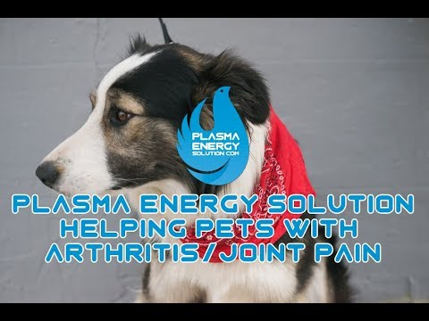 Plasma Energy Solution Pets With Joint Pain