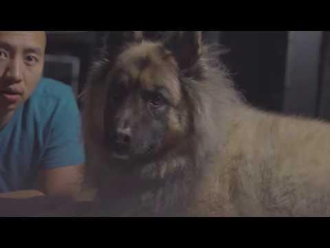 My dog, a Belgian Tervuren Shepard - Sony A6300 4K Video Test