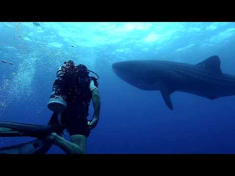 Malpelo - An Island Under Attack | Coiba Dive Expeditions