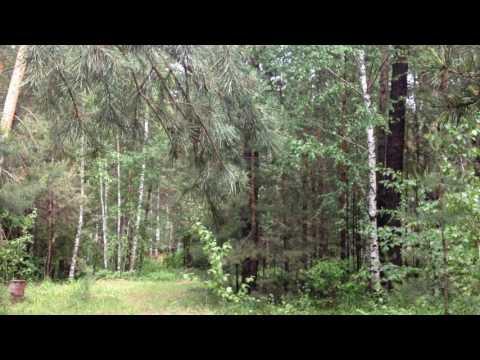 Русский лес летом, пение птиц. Прогулка.Путешествия по Новосибирской области.