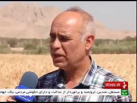 Iran Isfahan province, Mechanized Wheat harvest برداشت مكانيزه گندم استان اصفهان ايران