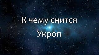 К чему снится Укроп (Сонник, Толкование снов)