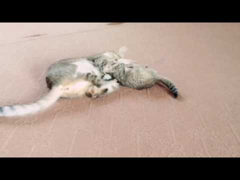 ASMR Cat playing and feeding her kid
