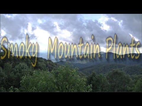 Edible & Medicinal Plants Of The Smoky Mountains