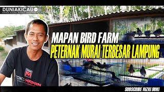 MAPAN BIRD FARM Peternak Murai terbesar di Lampung