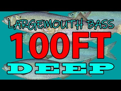 Catch Largemouth In 100ft Of Water! Suspended Bass Fish