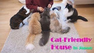 5匹の猫ちゃん達が、快適に過ごせる猫ハウスを、訪問しました。 新人の...