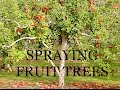 SPRAYING FRUIT TREES THE ORGANIC WAY