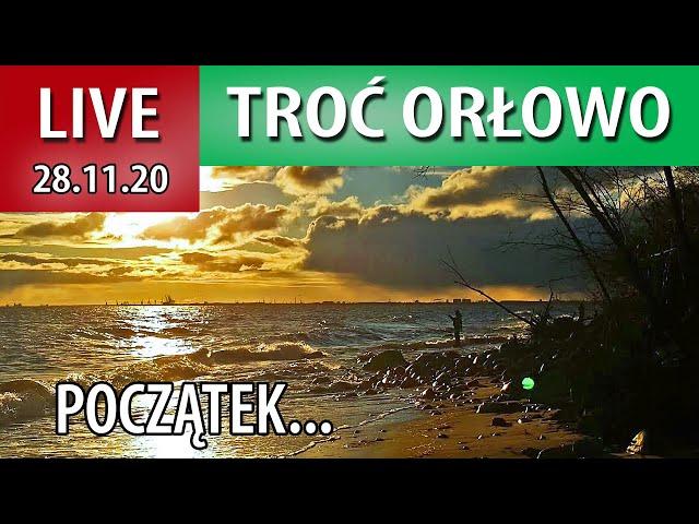 LIVE ➤ Orłowo troć - DUŻE FALE