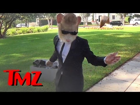 kia soul hamster caught by the tmz tour looking slim tmz youtube. Black Bedroom Furniture Sets. Home Design Ideas