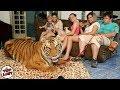 Keluarga Ini Memelihara Harimau di Rumahnya!, 5 Hewan Peliharaan Paling Gokil di Dunia