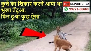 Rajasthan jaipur leopard vs dog fight video is going viral | Topreporter news