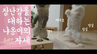 [몽룡이사또TV] NEW TOY편 고양이는 새로운 장난…