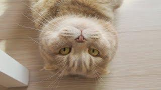 고양이-이즈가-삐뚤어졌어요