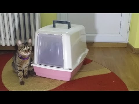 Do cats like covered litter box ?