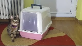 Do cats like covered litter box