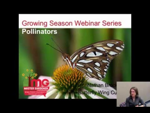 Pollinators and Growing Herbs: Growing Season Webinar