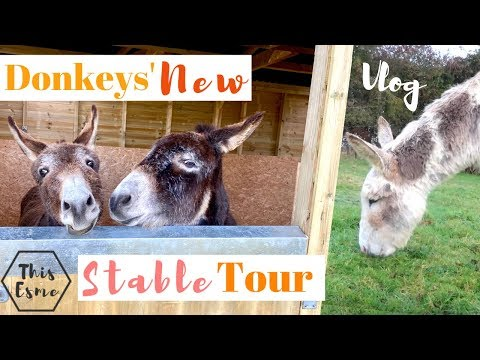 NEW Donkey Stable TOUR | Barn Vlog | This Esme
