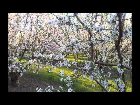 samsung galaxy s2 1080p video sample