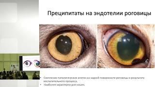 Сергей Бояринов - Увеиты кошек