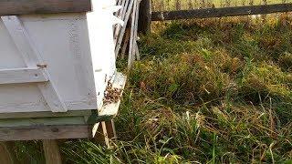 Пчеловодство с нуля - Осень 2019