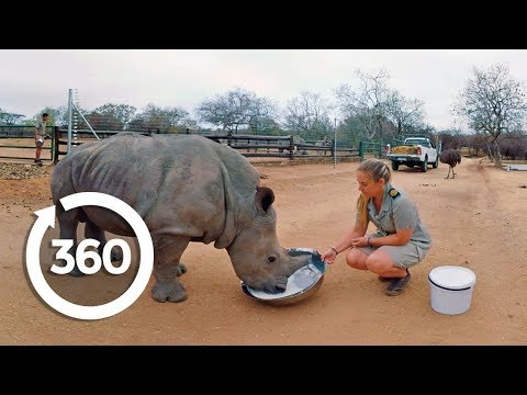 Rescuing Rhinos (360 Video)
