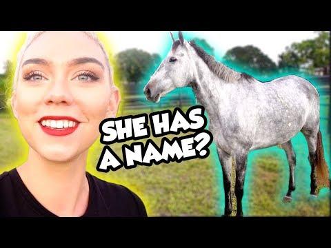 I FINALLY NAMED MY HORSE!