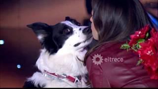 Video: Bailó con su perrito
