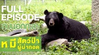 กบนอกกะลา : หมี