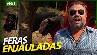 CANE CORSO, MONSTROS ENJAULADOS! | RICHARD RASMUSSEN
