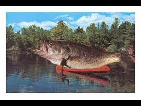 largest fish ever caught rod and reel youtube