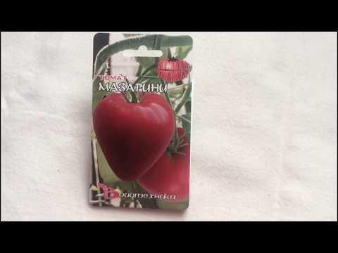 Изумительный сорт томата -  Мазарини | огородникам | помидоры | мазарини | томатов | помидор | вкусные | томаты | томата | семена | томат
