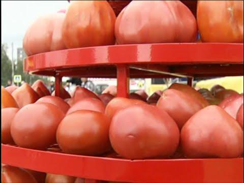 День помидора в Минусинске собрал более 15 тысяч гостей