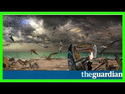 Pterosaurs: record haul of egg fossils from ancient flying reptile found in china