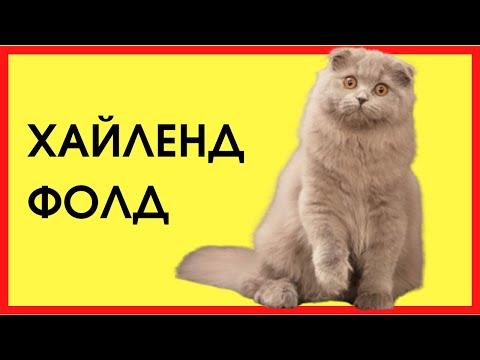 ХАЙЛЕНД ФОЛД