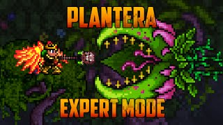 Video Terraria 1.3 - Plantera, Expert Mode Boss Battle download MP3, 3GP, MP4, WEBM, AVI, FLV November 2018
