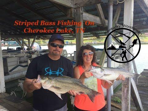 Striped Bass on Cherokee Lake